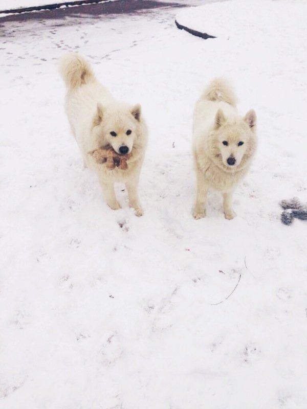 snow dogs margaret ann pyburn.JPG
