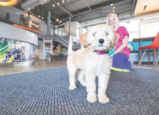 BIZ - Pets At Work_2.jpg