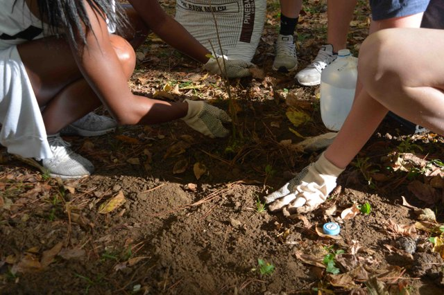 HEC planting 11-4-17 samford students plant tree.jpg