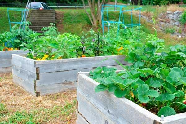 Homewood community garden