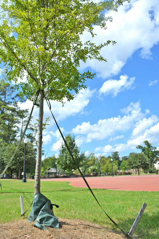 FEAT---Tree-Planting_DSC_2409.jpg