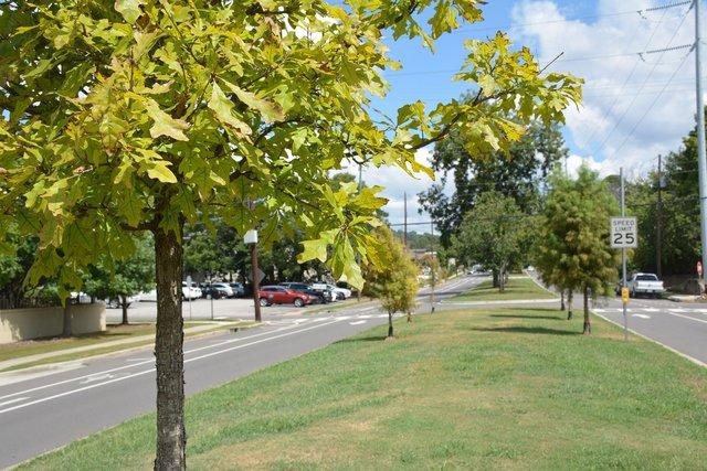 FEAT---Tree-Planting_DSC_2421.jpg