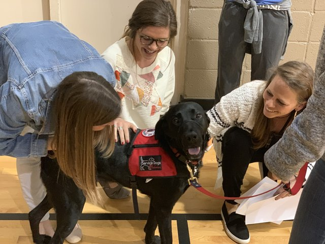 Russell the Service Dog
