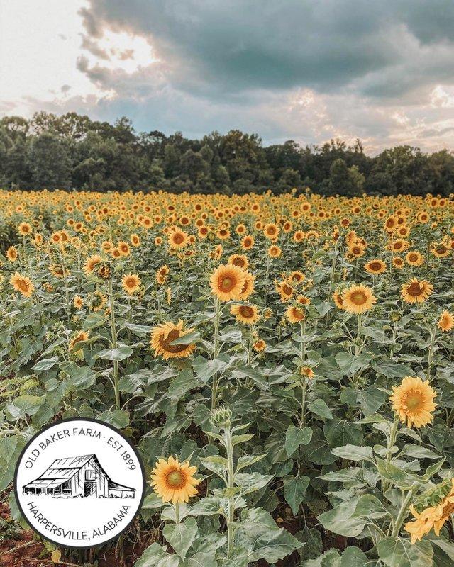 EVENT---Old-Baker-Farm-Summer-Shindig.jpg