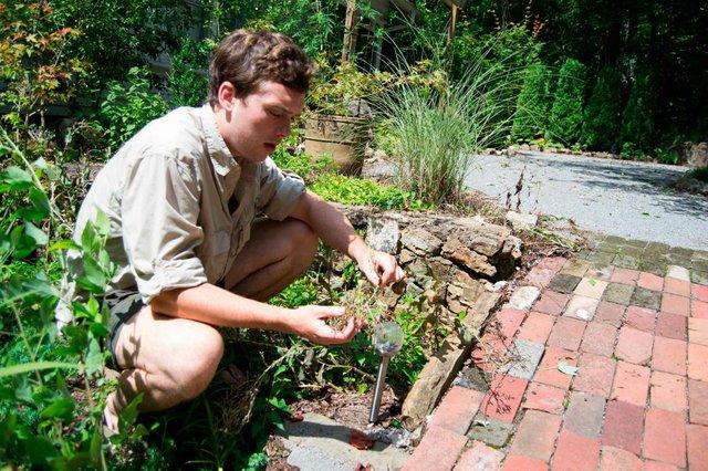 Sims Garden Ian Hazeloff