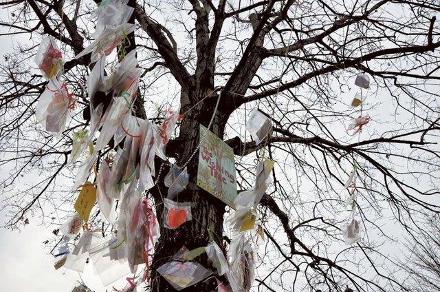 STAR-EVENTS-Wishing-Tree.jpg
