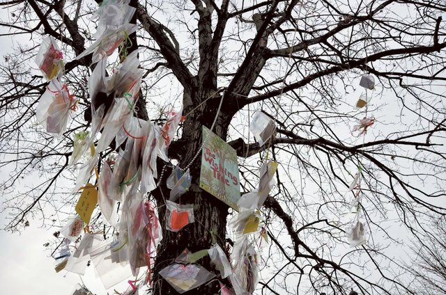 STAR-EVENTS-Wishing-Tree.jpg