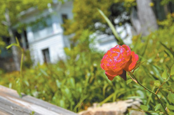 0512 Sims Garden Flower