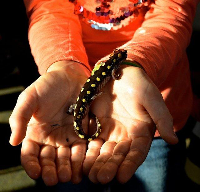 Salamander Festival21.JPG